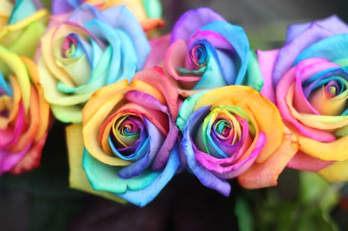 Imagine de stoc gratuită din colorat, decorativ, floare frumoasa