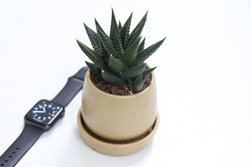 Free stock photo of apple, apple watch, minimal, plant
