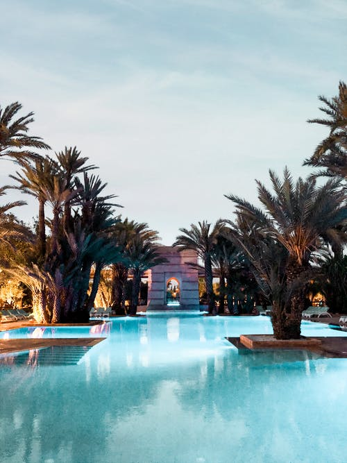 Photo Of Palm Trees On Swimming Pool