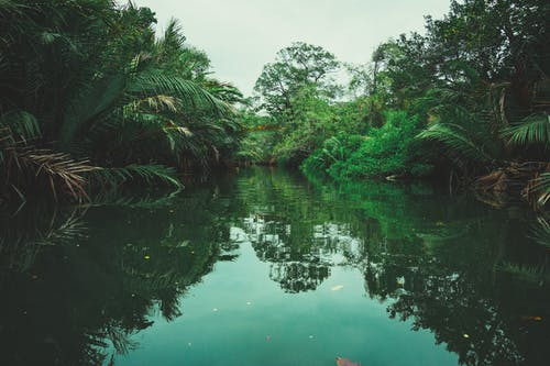 Free stock photo of forest, nature, swamp