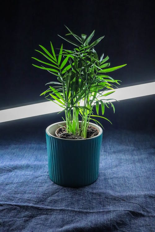 Green Potted Plant on Blue Textile