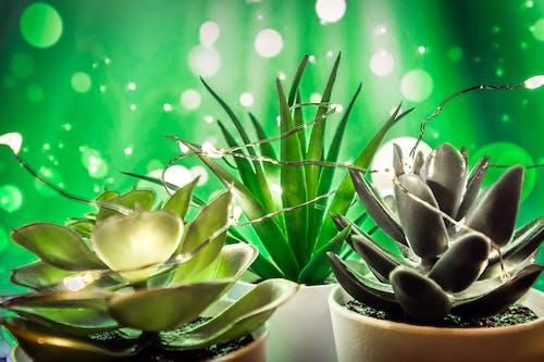 Kostenloses Stock Foto zu bunt, dunkelgrüne pflanzen, farbenfroh