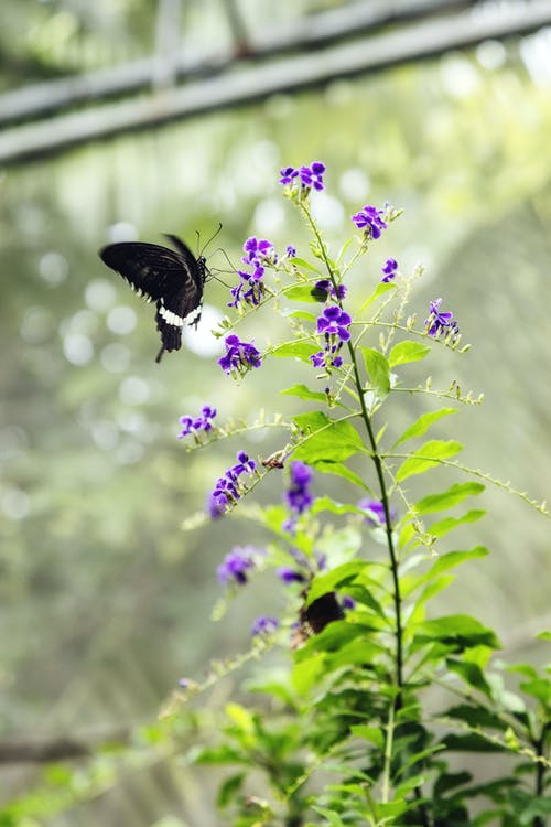 Small black butterfly on blooming flower