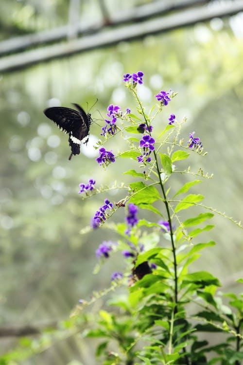 Fotos de stock gratuitas de amable, arbusto, belleza, botánica