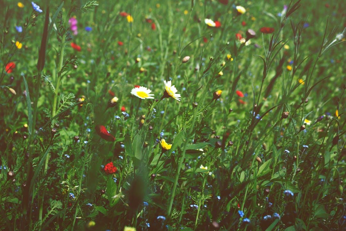 การเจริญเติบโต, กำลังบาน, ดอกไม้