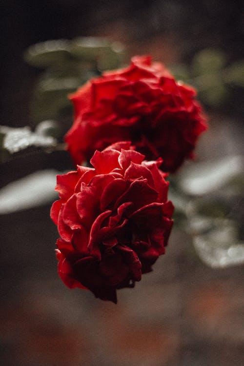 계절, 근접 초점, 꽃, 꽃이 피는의 무료 스톡 사진