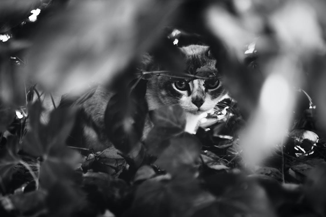 černobílá, kočka, rostlina