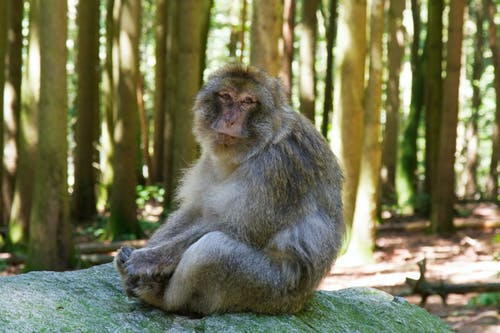 Brown Monkey Sitting on a Green Rock
