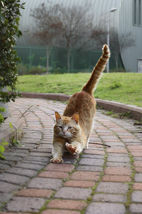 Photo Of Stretching Cat