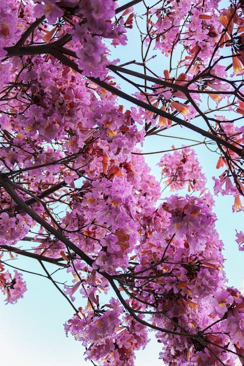 シーズン, パーク, ピンクの無料の写真素材