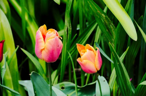 Photos gratuites de botanique, couleurs, fleurs, floraison