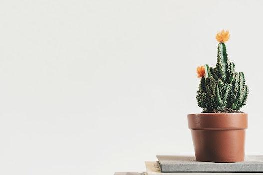 Desktop background of plant, pot, table, flower