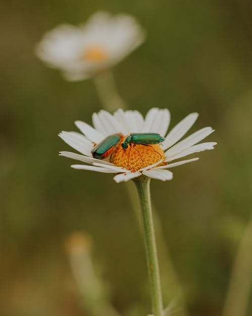 Green Insects on White Flower