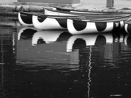 경치, 교통체계, 노 젓는 배, 물의 무료 스톡 사진
