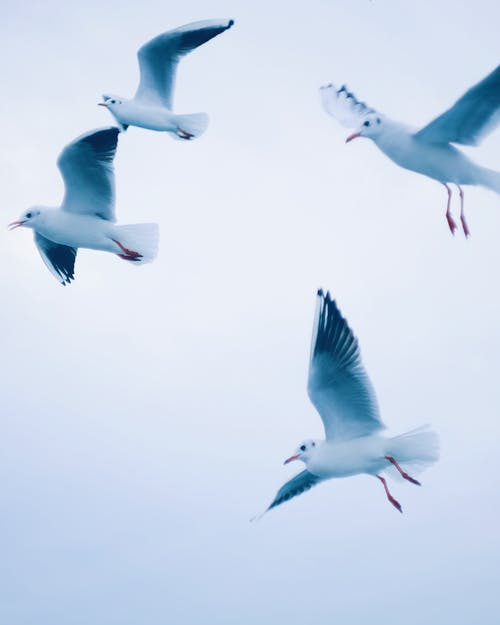 Photo Of Group Of Flying Birds