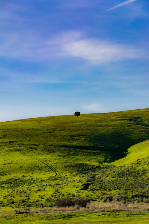 Lonely tree on big green slope