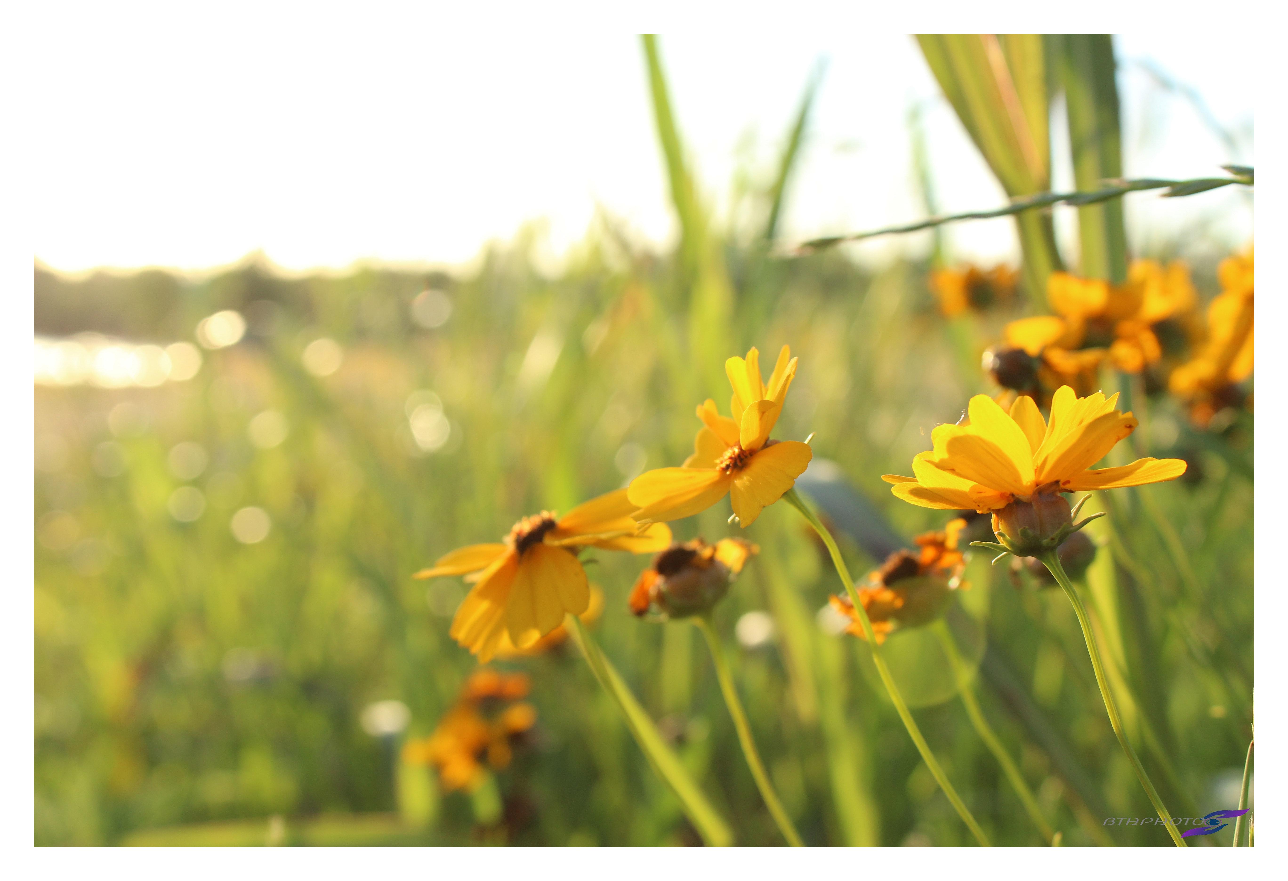 Free Stock Photo Of Adobe Photoshop Art Nature Photography
