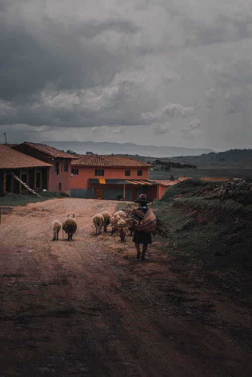 Unrecognizable man herding sheep in village