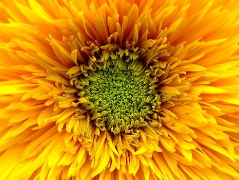Kostenloses Stock Foto zu natur, sommer, gelb, blütenblätter