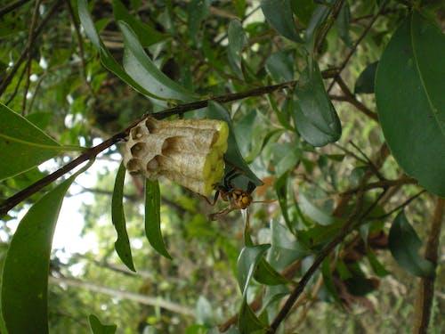Foto stok gratis alami, merapatkan, sarang lebah, serangga