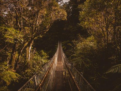 Δωρεάν στοκ φωτογραφιών με γέφυρα, γραφικός, δασικός, δέντρα