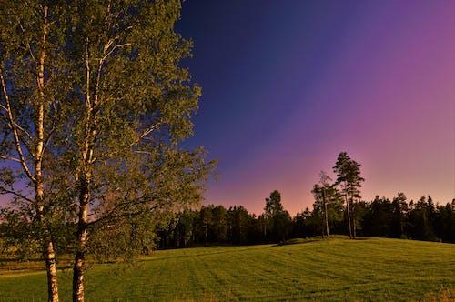 Free stock photo of blue, evening, field