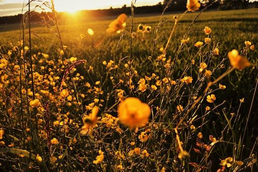 Free stock photo of landscape, nature, sunset, field