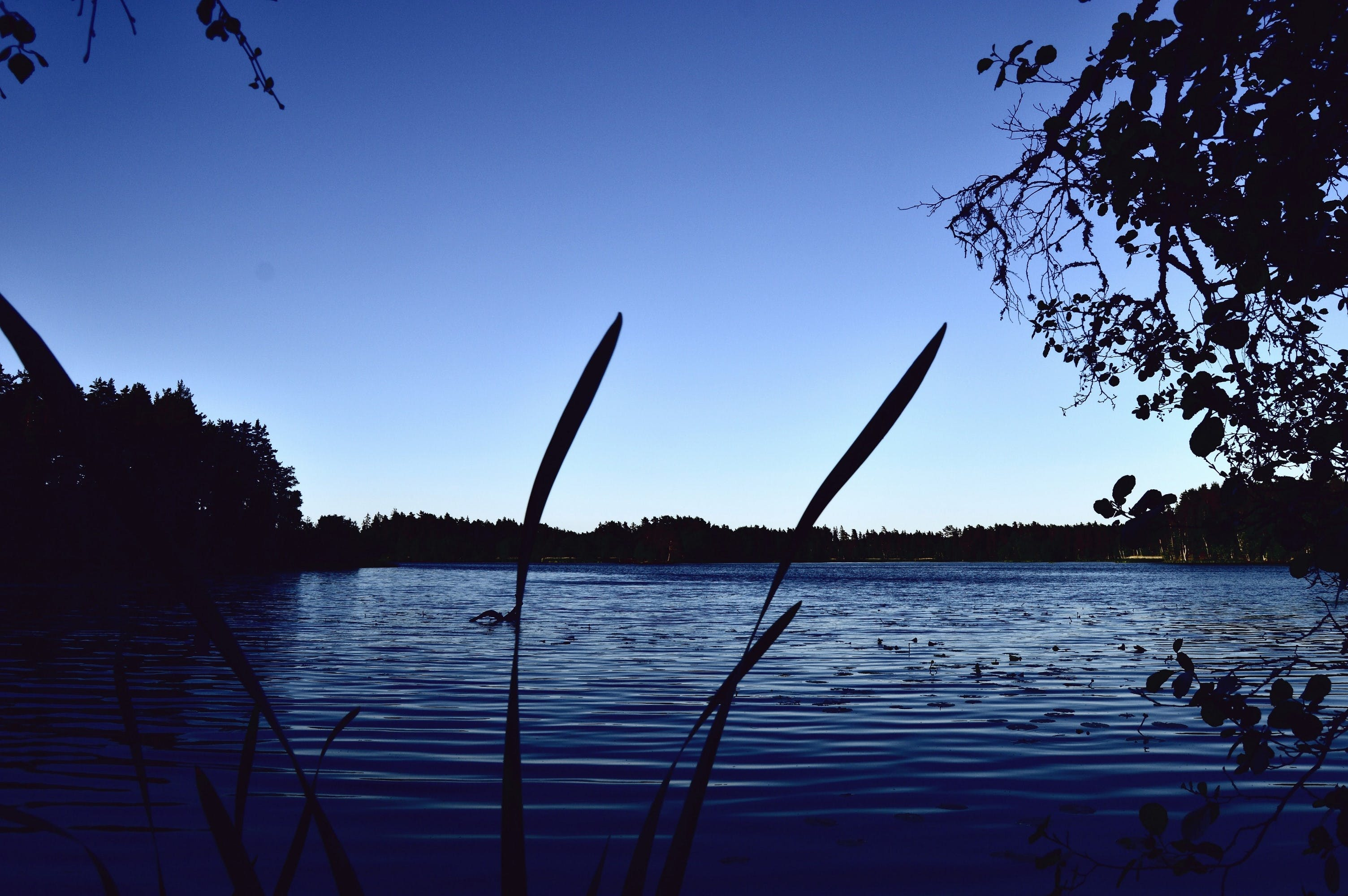 Free stock photo of blue, evening, forest, lake
