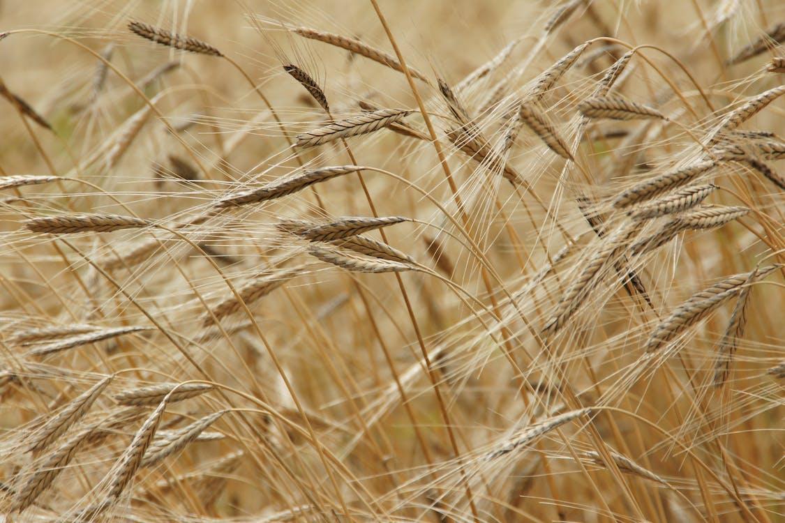 заводы, здоровый, зерна