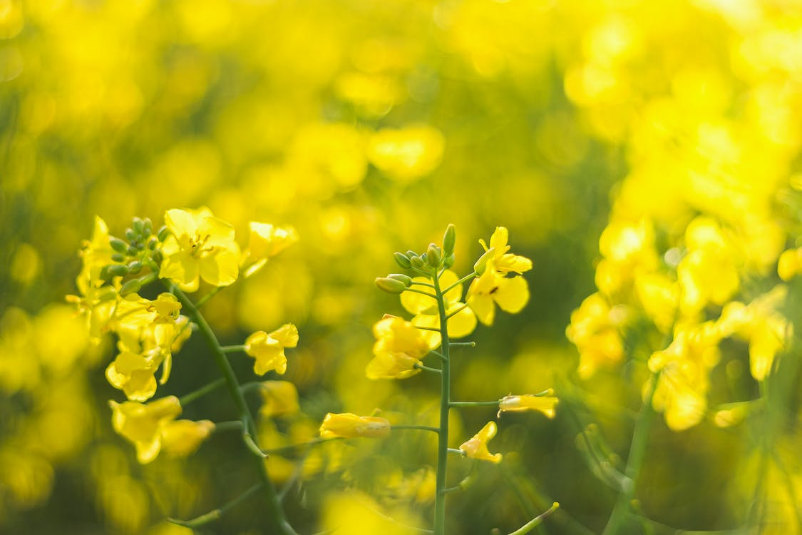 Selective-focus Photography of Yellow Petaled Flowers