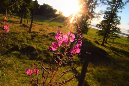 Free stock photo of field, flower, landscape