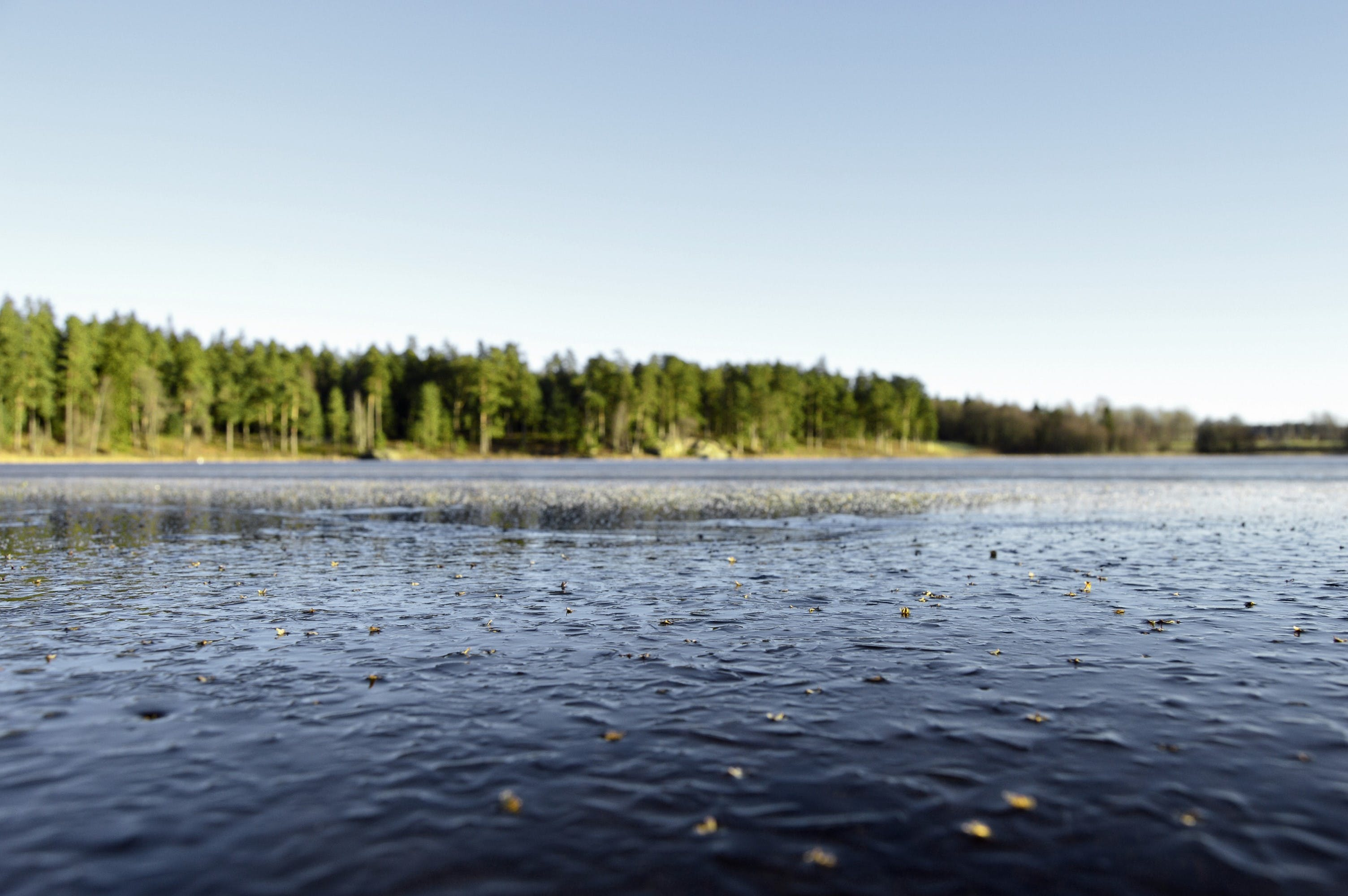 Free stock photo of forest, landscape, nature, sweden