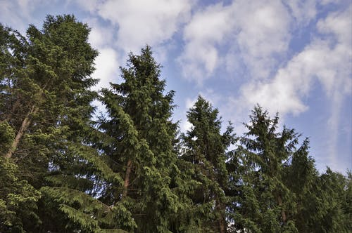 Free stock photo of clouds, forest, nature