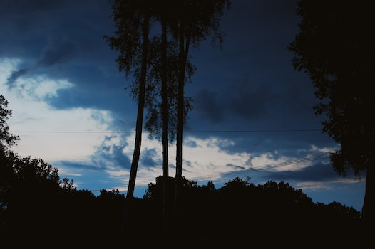 Free stock photo of nature, night, clouds, forest