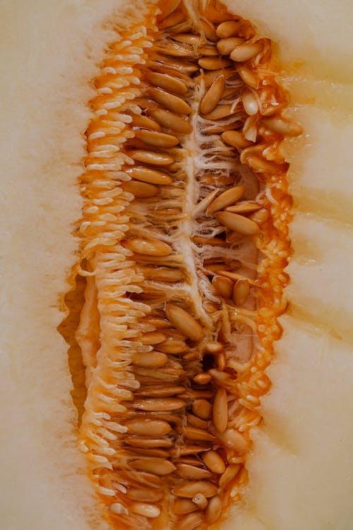 Close-Up Photo Of Melon Seeds