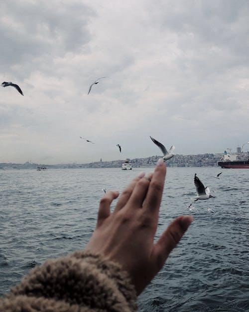 Personne Anonyme Pointant Le Doigt Sur L'oiseau