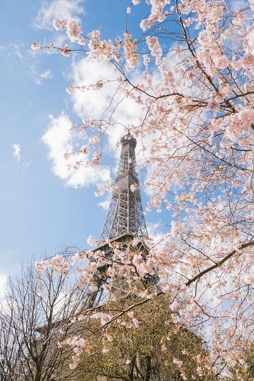 Photo Of Eiffel Tower During Daytime