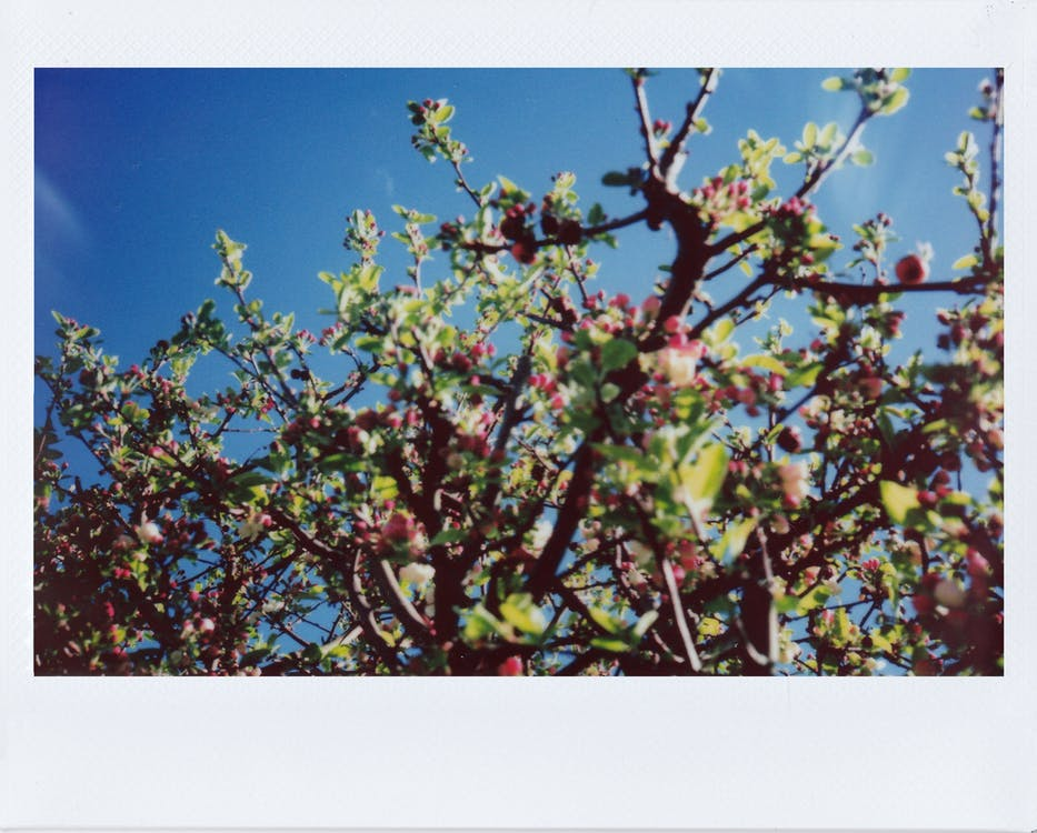 Green and Red Leaves Under Blue Sky
