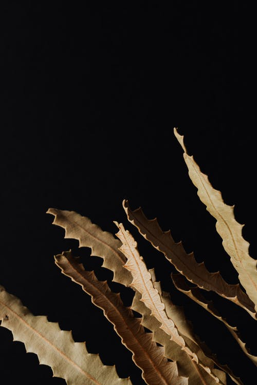 Dried Leaves In Black Background