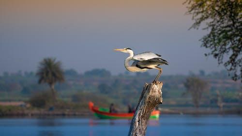 Graceful heron on tree in river