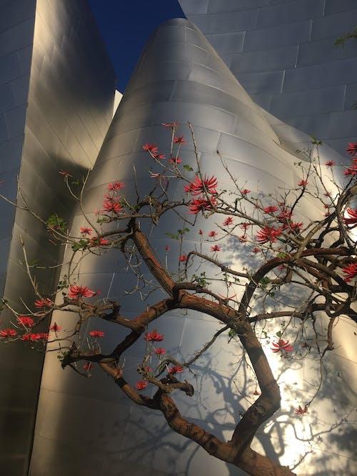 Kostnadsfri bild av blomma, konsert, Los Angeles, modern