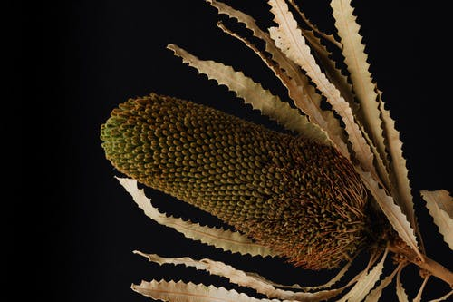 エキゾチック, エレメント, オーストラリア, オーバーヘッドの無料の写真素材