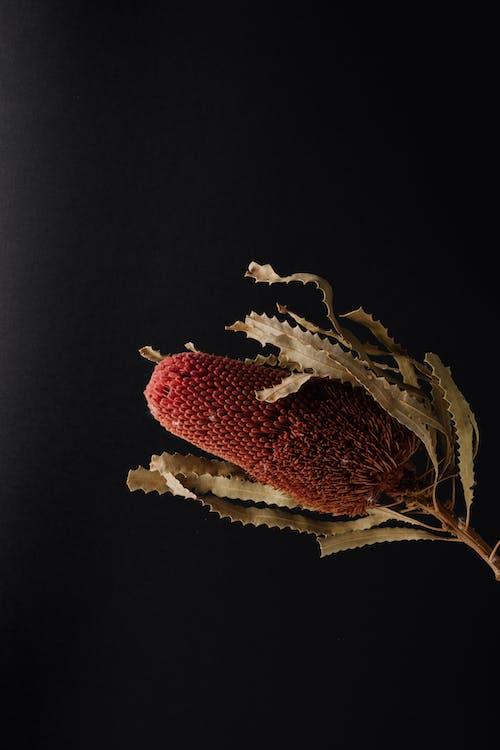 Imagine de stoc gratuită din arbore, arbust, arc, australia