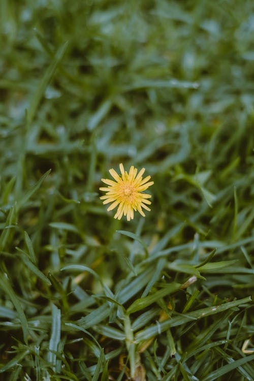 Yellow Flower on Green Grass