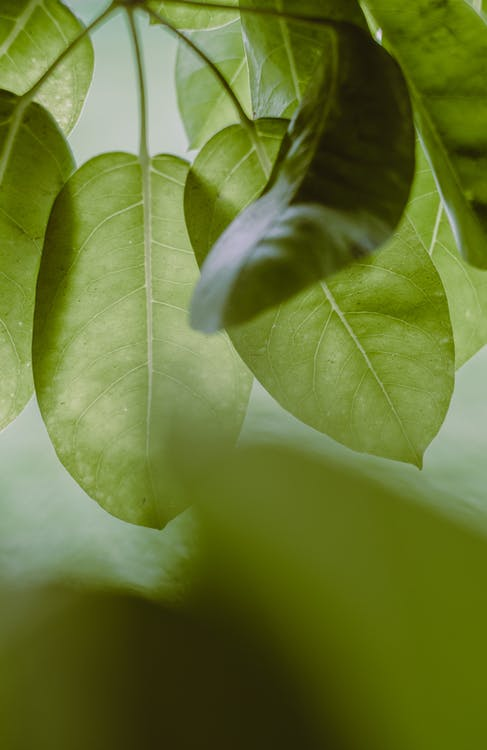 Green Leaves in Close-up Photography