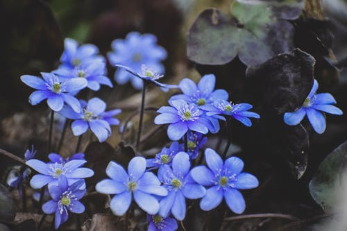 Free stock photo of blue, flowers, nature