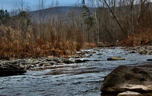 Fotobanka sbezplatnými fotkami na tému hnedo-zeleň, holé stromy, hory, koryto rieky
