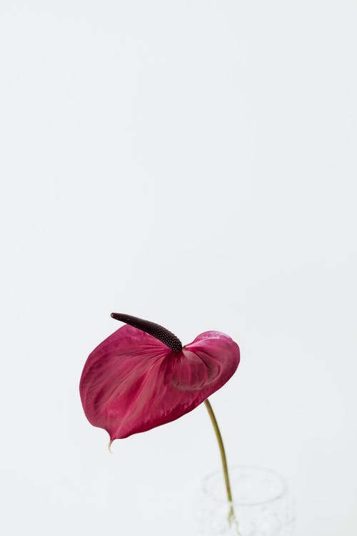 Fotobanka sbezplatnými fotkami na tému botanika, čerstvý, Copy Space, dar