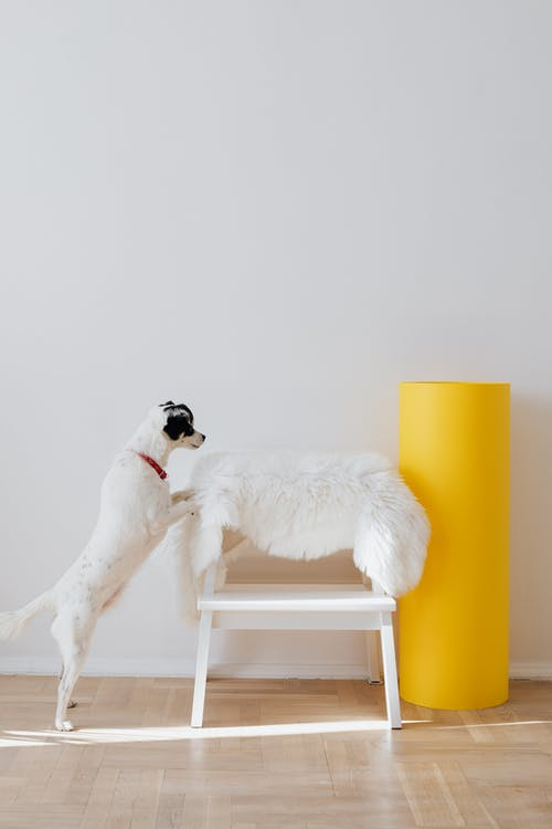 Photo Of Dog Leaning On Chair