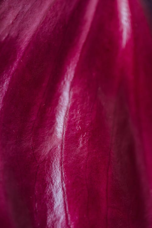 Fotobanka sbezplatnými fotkami na tému abstraktný, anthurium, aróma, botanika